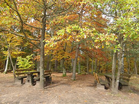 Resting Place, Forest, Autumn, Emerge, View, Palatinate