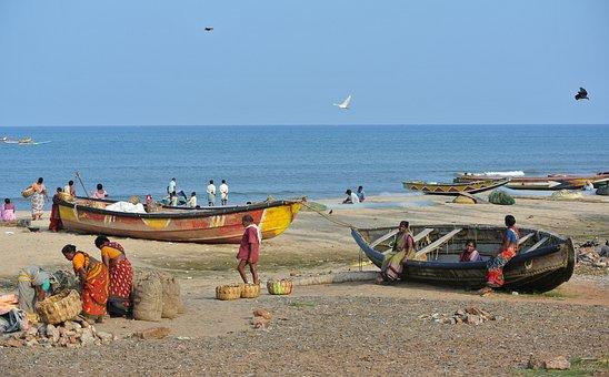 India, Fisherfolk, Fishing, Fish, Labour, Boats, Beach