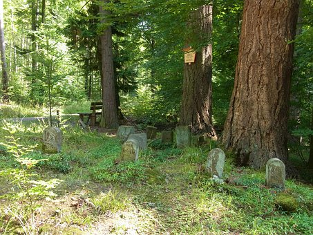 Dogs, Animals, Grave, Graves, Rest, Forest