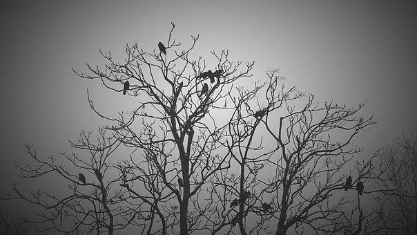 Black, White, Tree, Birds, Animals, Dark, Gloomy