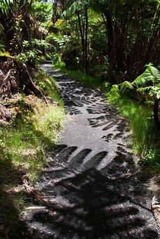 Trail, Shadow, Hiking, Path, Fern, Hawaii