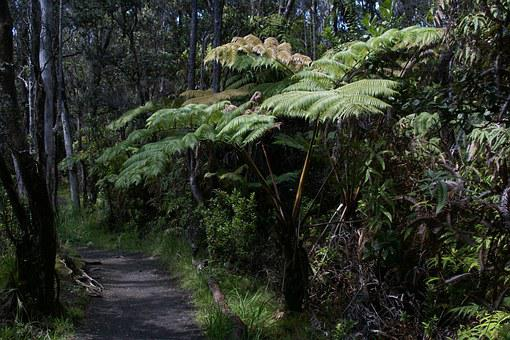 Hawaii, Iki Lookout Trail, Volcanoes National Park