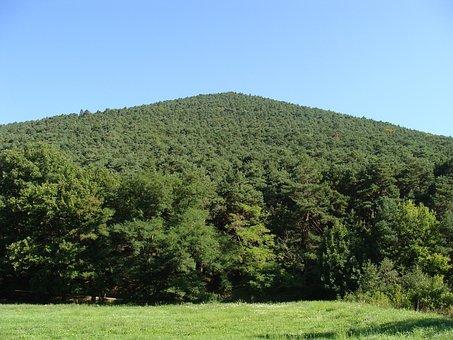 Hüttenberg, Palatinate Forest, Hill, Mountain, Forest