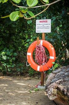 Singapore Coney Island, Green, Sign, Tree, Eco, Nature