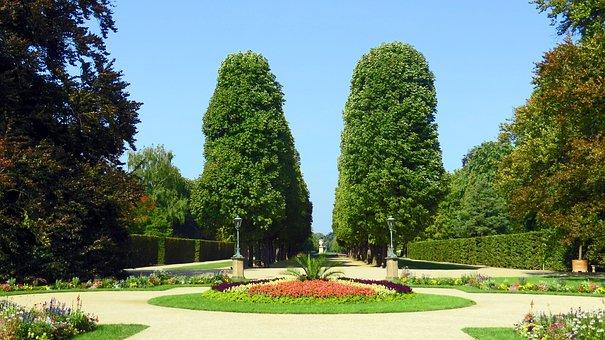 Park, Castle Park, Pillnitz, Schlossgarten, Green Area