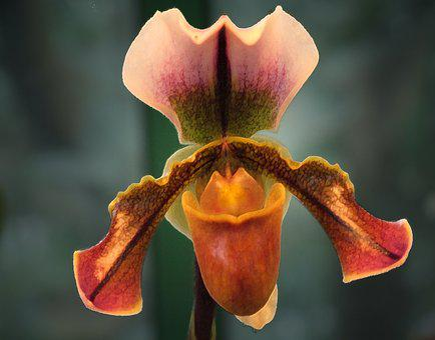 Orchid, Flower, Plant, Orchidea, Decorative, Beauty