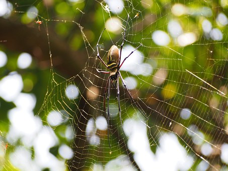Spider, Netting, Hunting, Sit Back And Wait