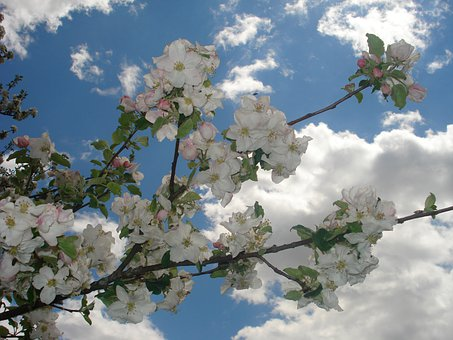 Spring, Flowers, Sunshine, Blue, Sky, Clouds, White