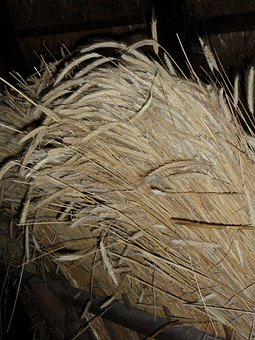Sheaf, Cereals, Bundle, Tufts, Grain, Harvest, Spike