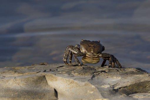 Crab, Sea, Nature, Walks On The Sea, Vacation