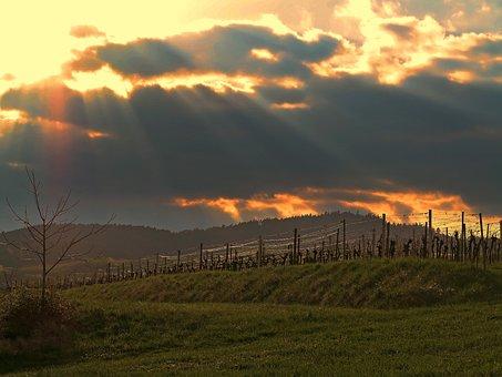 Sunset, Sun, Vineyard, Wingert, Afterglow
