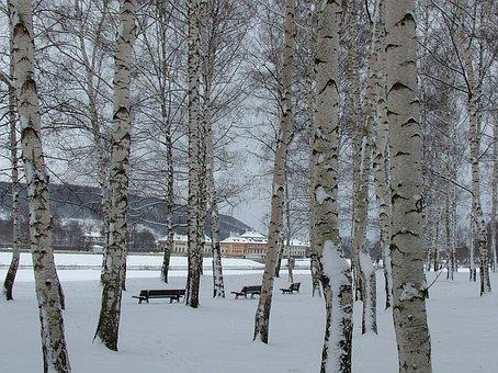 Pillnitz, Dresden, Winter, Snow, Castle