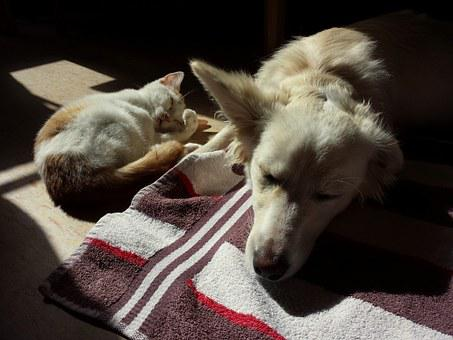 Pets, Cat, Dog, Cute, Together, Kitten, Animal