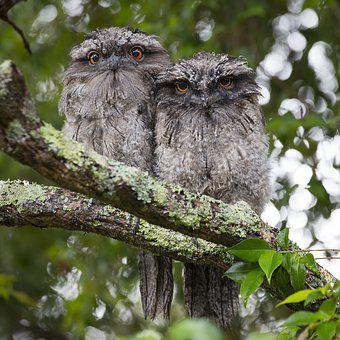 Animal Photography, Animals, Birds, Owls, Tree
