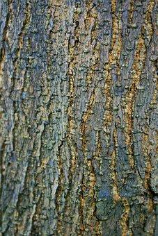 Bark, Patches, Natural, Organic, Birch, Environment