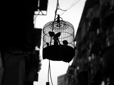 Animals, Birds, Cage, Pets, Silhouette