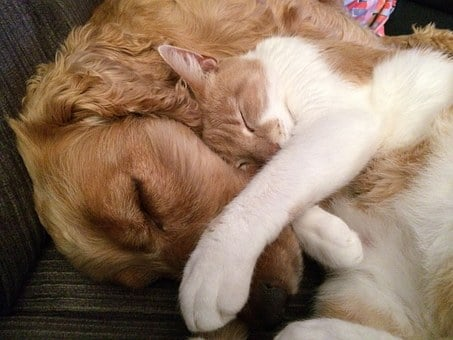 Cat And Dog, Friends, Cat, Dog, Cute, Friendship, Two