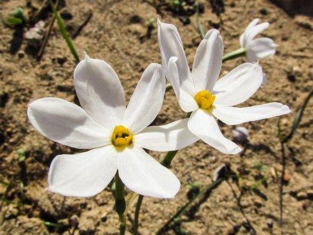 Lily, Flower, White, Blossom, Petal, Nature, Flora