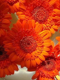 Orange, Flower, Bouquet, Round, Petals, Summer, Banners