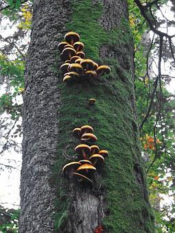 Hub, Hubs, Tree, Moss, The Bark, Forest, Closeup