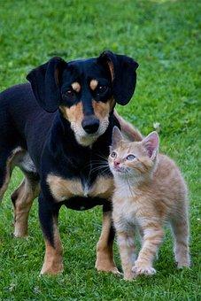 Cat, Dog, Animals, Pets, Garden, Friends, Lovely