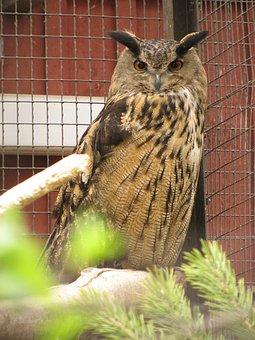 Eagle Owl, Bubo Bubo, Bird Garden, Injured Bird