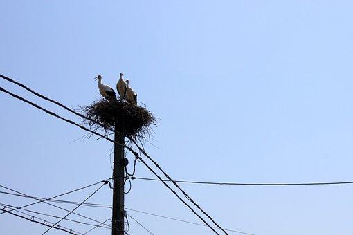 Nest, Poles, Power, Sky, Storks, Utility, Birds