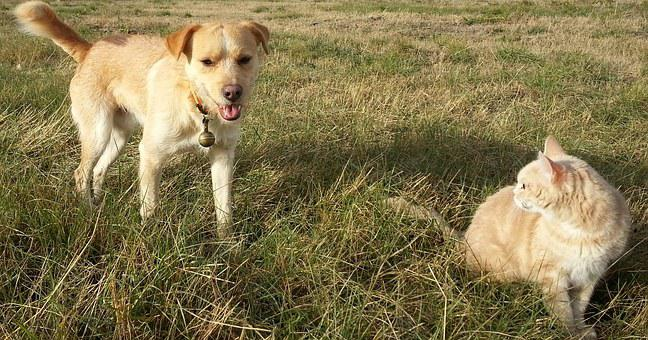 Dog, Cat, Field, Animals, Ginger, The Nature, Outdoores
