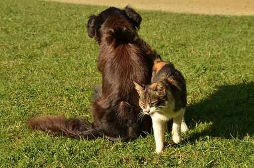 Dog, Cat, Pet, A Friend, Together, Friendship