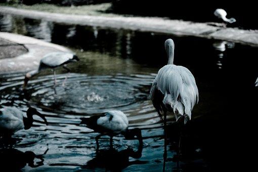 Animal, Bird, Mood, Sad