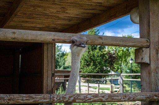 Ostrich, Nature, Zoo, Farm, Summer, Tourism, Forest