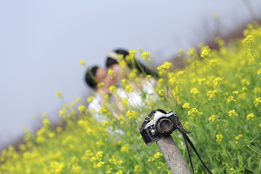 Wedding, Weak, Than, A Couple, Flower, Field, Camera