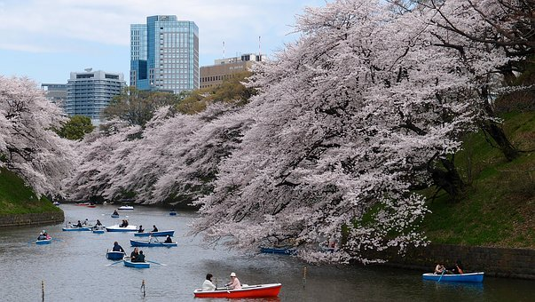 Boat, Cherry Blossom, Park, River, Spring, Tokyo