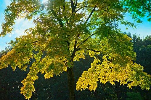 Tree, Tree Top, Foliage, Yellow, Season, Autumn, Nature
