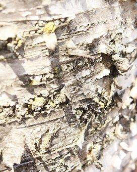 Bark, Tree, Wood, Trunk, Macro, Texture, Gray, Curled