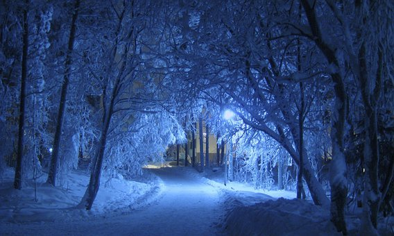 Winter, Night, Blue, Shade, Trees, Snow Covered, Cold