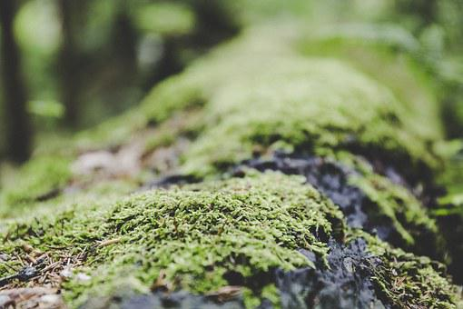 Moss, Forest, Ground, Nature, Mushroom, Green
