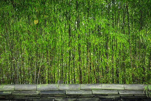 Bamboo, Wood, Plants, Nature, A Straight Line
