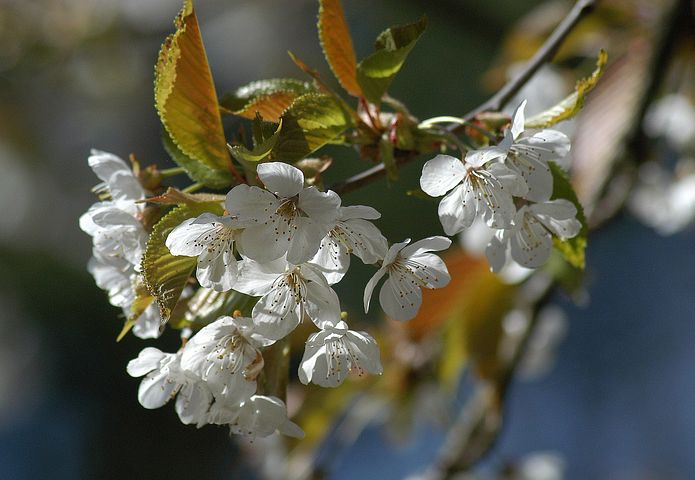 Blossom, Tree, Holiday, Spring, Flower, Green, Nature