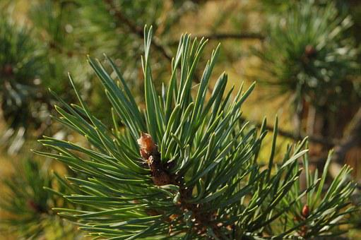 Spruce, Tree, Branch, Herringbone, Needles, Outdoors