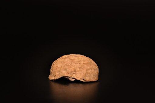 Nut, Walnut, Cut In Half, Half Walnut, Open, Empty