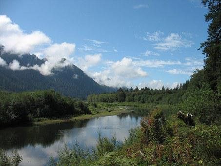 Quinault, River, Park, Olympic, Peninsula