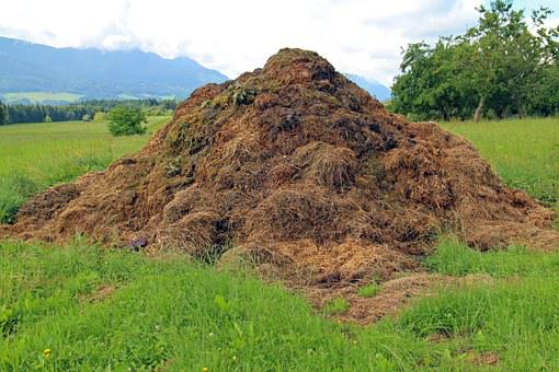 Dung, Compost Heap, Rallying Point, Crap, Waste, Farm