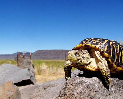 Turtle, Reptile, Rock, Shell, Carapace, Travel