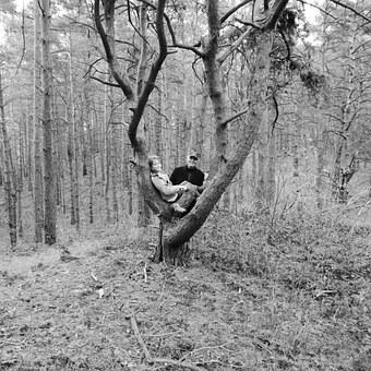 Father, Child, Forest, Tree Outing, Climbing, Human