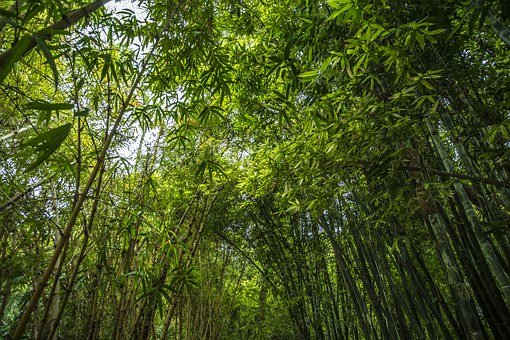 Bamboo, Forest, Green, Plant, Garden, Leaves, Trees