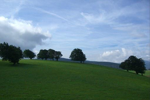 Weather Book, Book, Trees, Meadow, Pasture