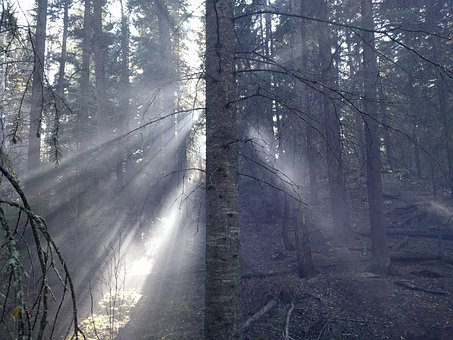 Forest, Trees, Sunlight, Smoke, Nature, Green