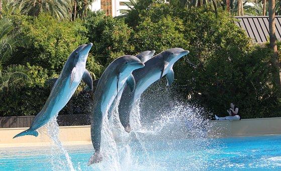 Dolphins, Show, Jumping, Water, Jump, Mammal, Marine