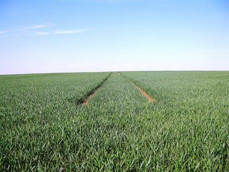 Monoculture, Away, Sky, Field, Fields, Agriculture